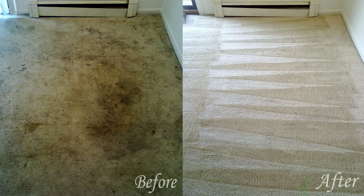 carpet dry cleaning Harkaway